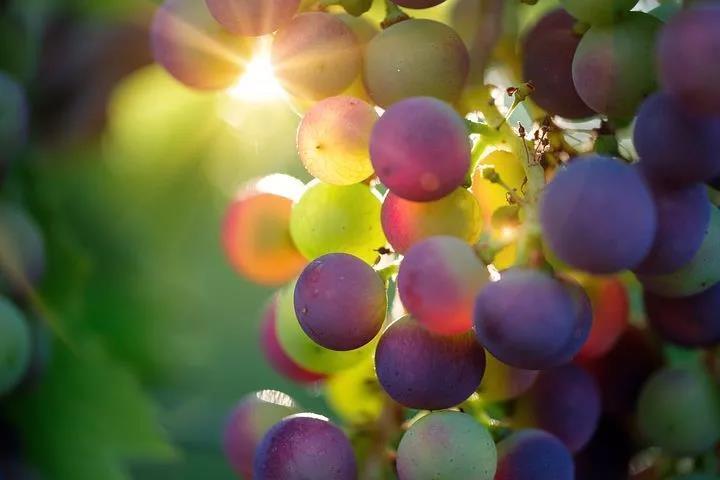 立秋后吃葡萄的,都看看,别说我没告诉你哦