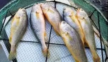 煎鱼时,只需记住这三点,保证不粘锅,不破皮,不管啥鱼都适用